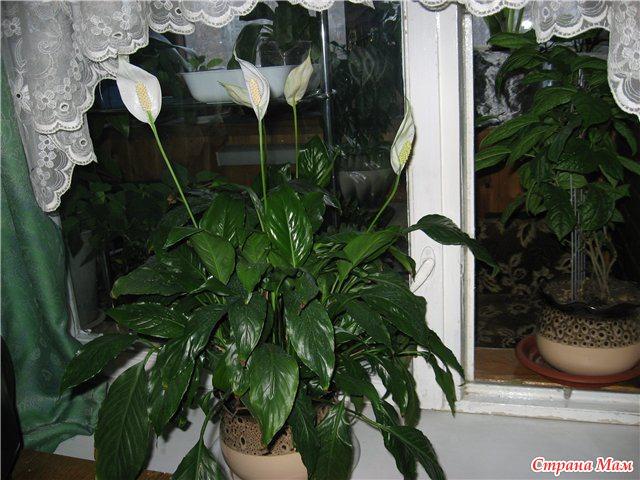 Тэги комнатные растения