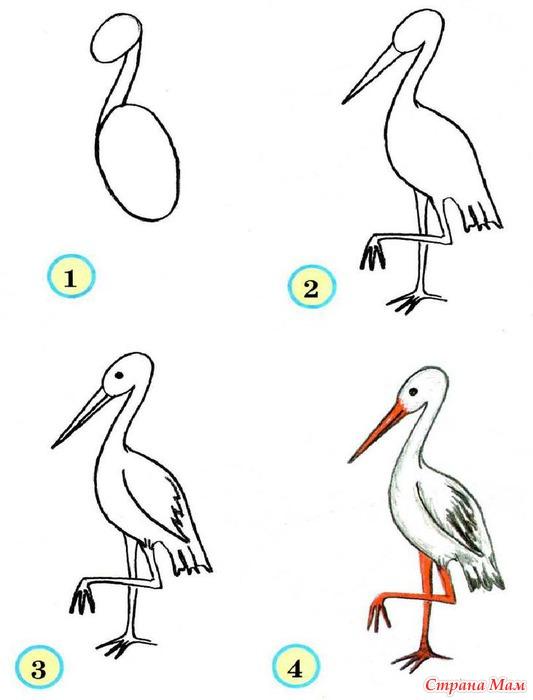 Научиться рисовать птиц