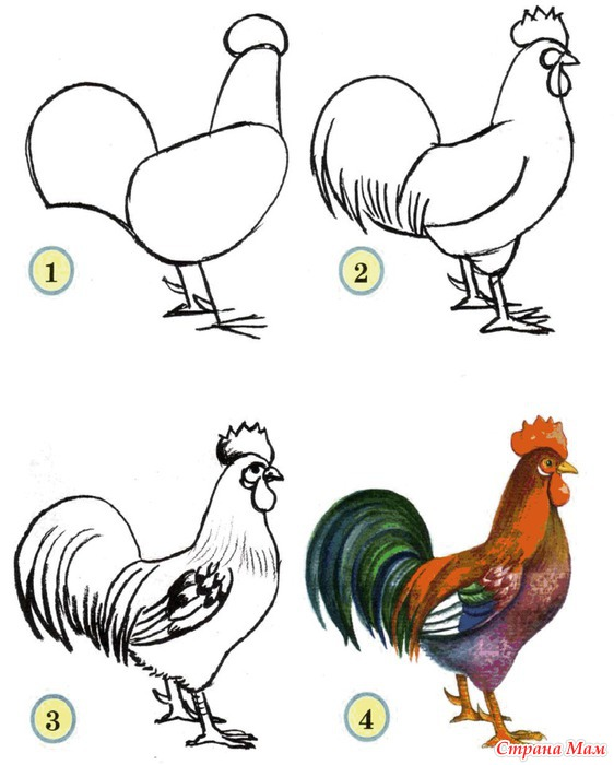 how to draw a realistic chicken