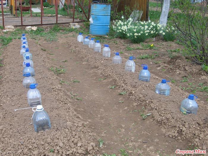 Посадка огурцов в 5 литровых бутылках, фото и видео 62