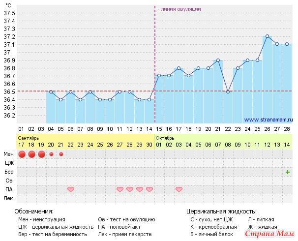 35 день цикла: