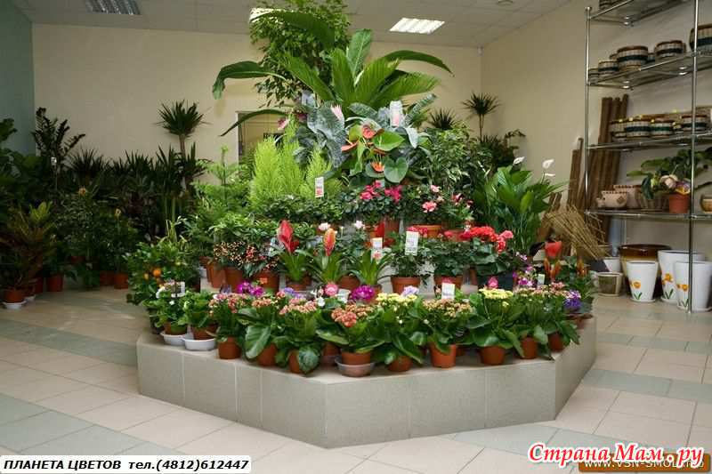 Купить горшечные растения продажа комнатных растений и