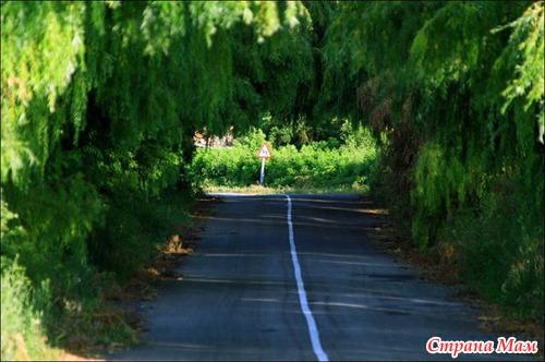 Причудливые тоннели из деревьев.