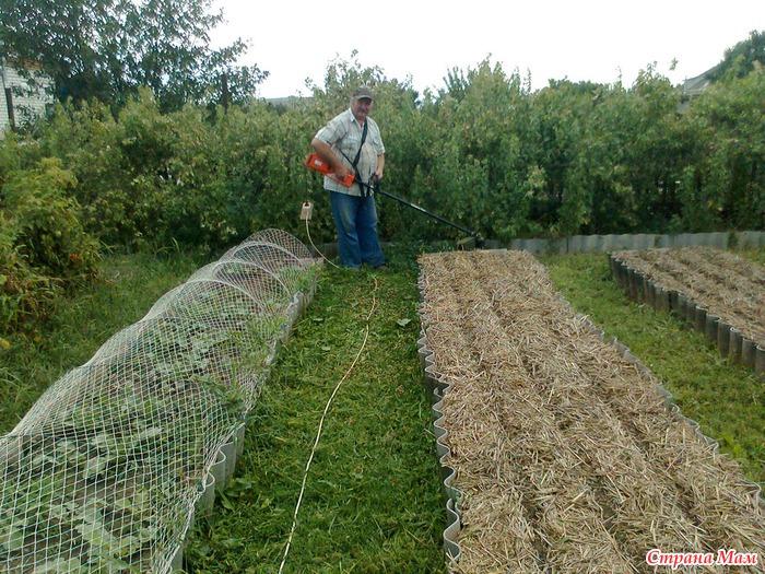 Что делать, чтобы между грядками не росла трава - DELFI 52