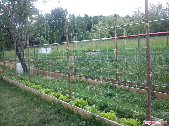 Как сделать забор для помидор