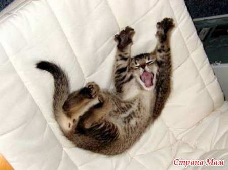 картинки с котиками доброе утро