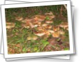 грибы (на участке)