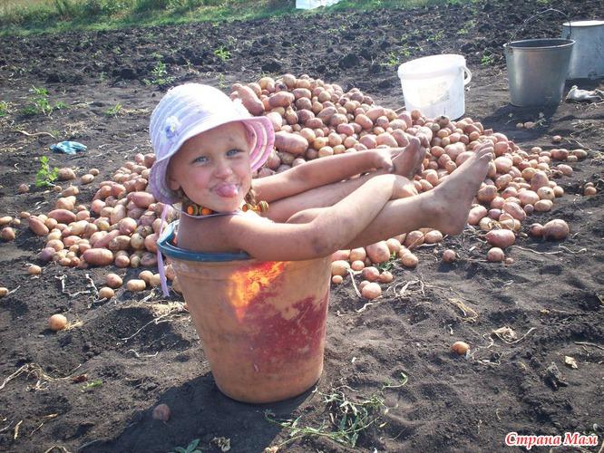 Марта фото, уборка картошки веселые картинки